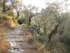 Kalderimi (kamene staze - stepenice)
